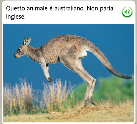 the kangaroo does not speak english