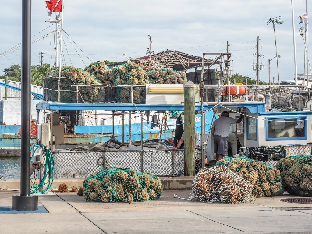Incoming haul at the Sponge Docks in Tarpon Springs, Florida